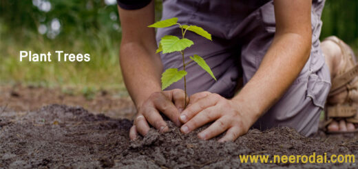 planting tree and importance
