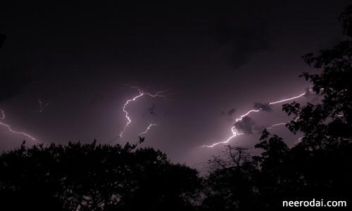 trees saves human life from thunder